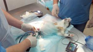 Эндоскопическая стерилизация
