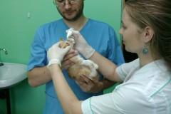 Вакцинация щенка \ котёнка