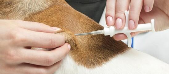 Чипирование собак и кошек